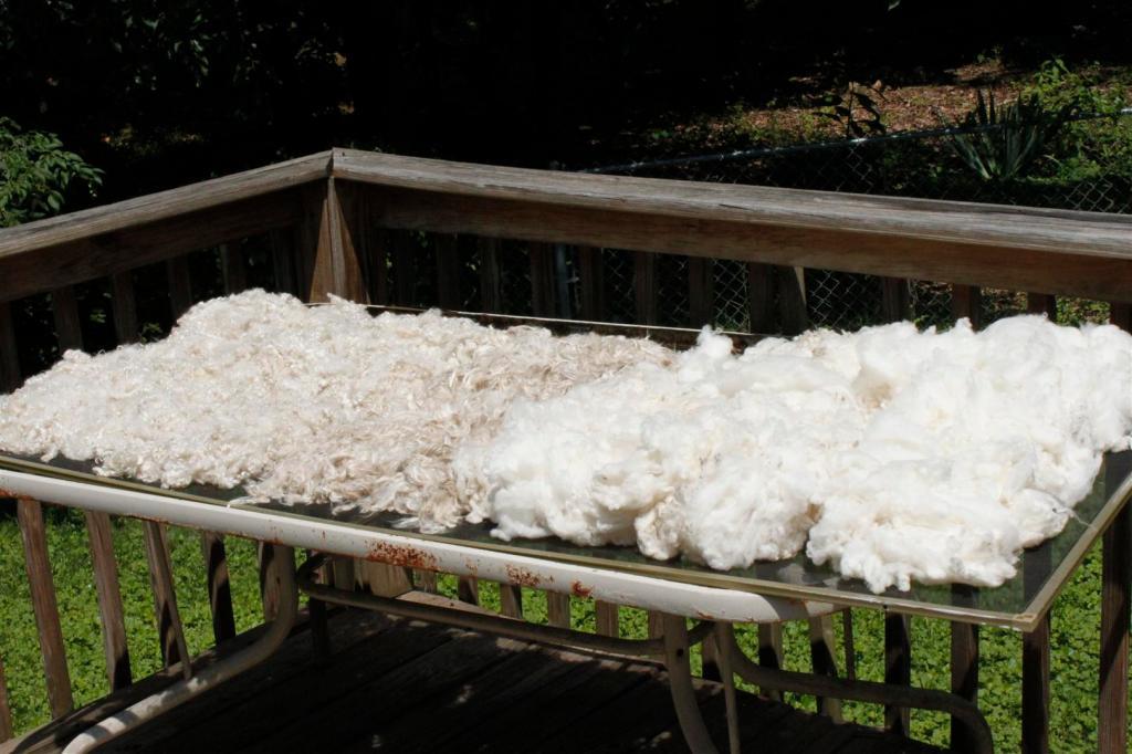 freshly washed wool