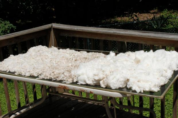 freshly washed wool