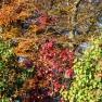 SAFF autumn colors